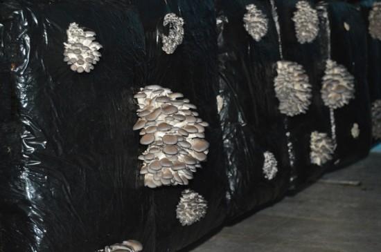 cogumelos atual (2)site