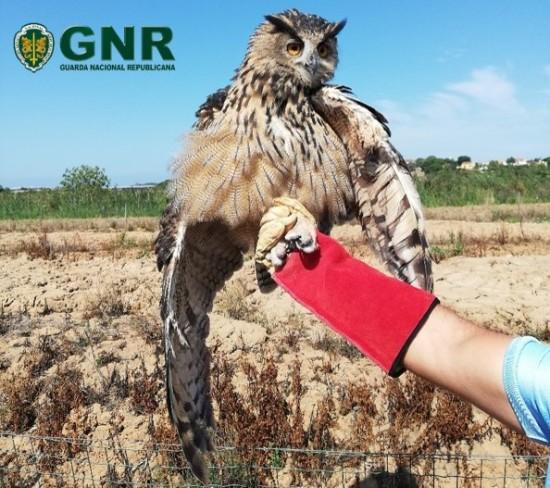 GNR Leiria - Recuperação de ave